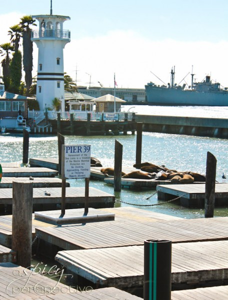 San Francisco Pier 39 | ASpicyPerspective.com